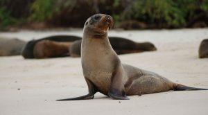 Sea lion in Galapagos Tour