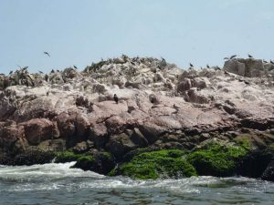 Sea lions Islas Ballestas tours