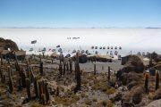 Inca Wasi Cacti Island