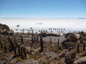 Inca Wasi Cacti Island Salar