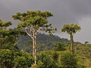 Hakuna Matata jungle tours Ecuador