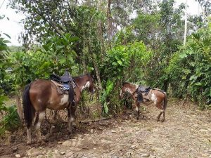 Hakuna Matata horses