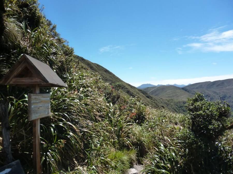 Wandelen in Podocarpus reservaat