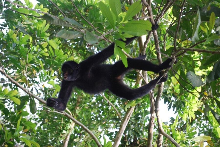 spider-monkey-amazon-tour