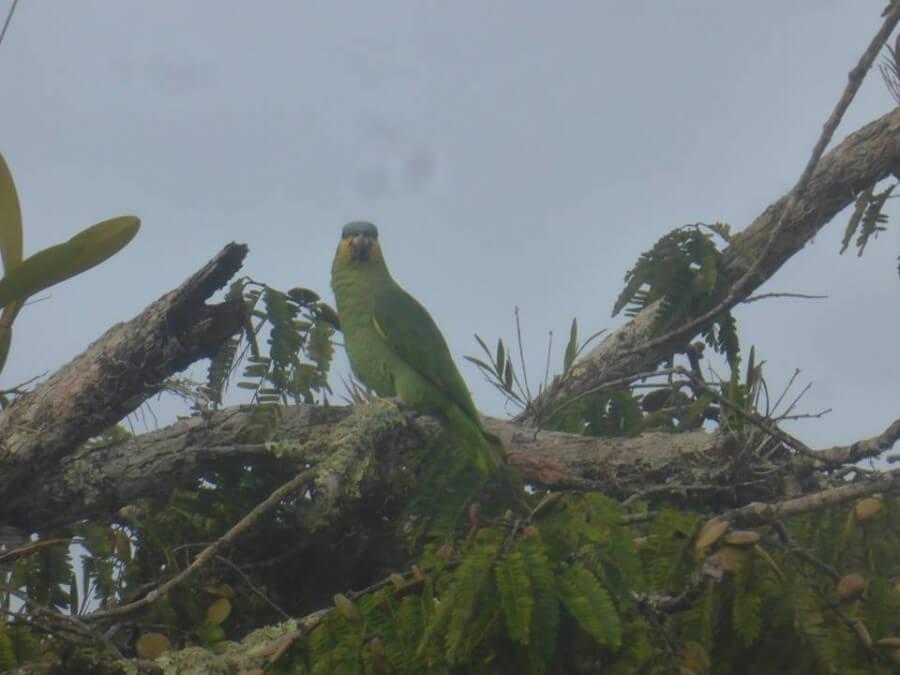 Parrot Cuyabeno Amazon tour