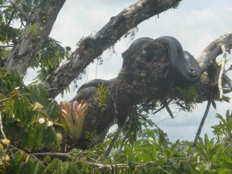 Anaconda Cuyabeno Amazon tour