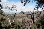 Polylepis trek, queñual trees