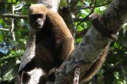 Wooler monkey