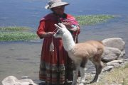 Old woman with baby lama