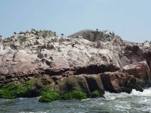 Islas Ballestas, Paracas tour