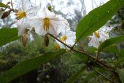 Parque Amboro Flowers