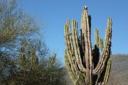 Bird house on cactus