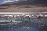 Flamingos in desert lake