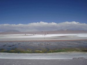 Flamingos flying over Laguna Colorada