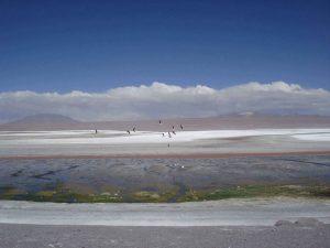 Laguna Colorada Salar tour