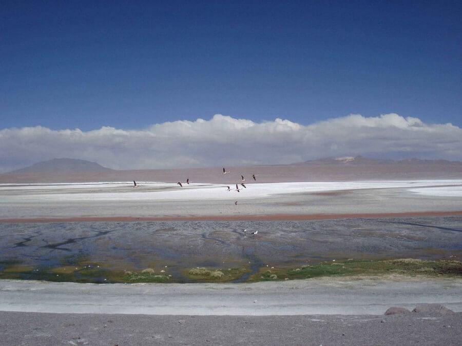 Flamingos flying over Laguna Colorada