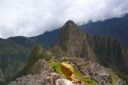 Lizard at Machu Picchu