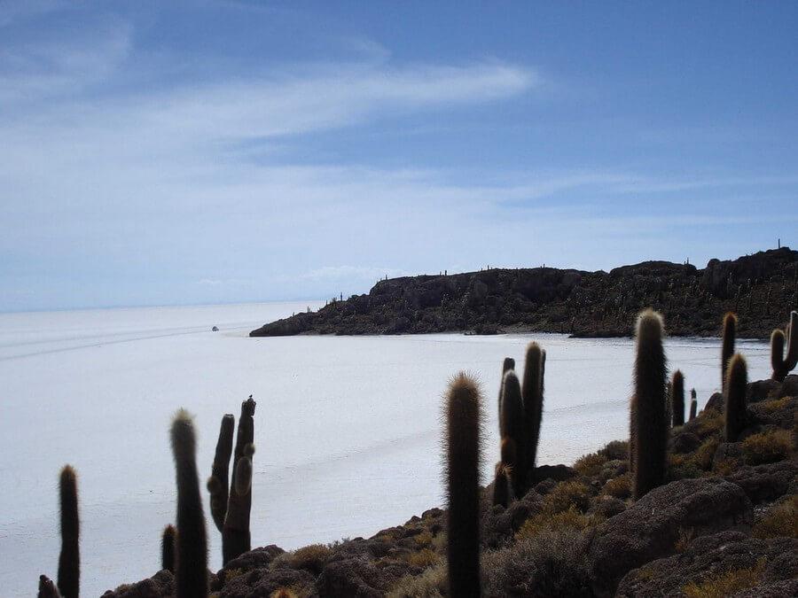 Cacti on Inca Wasi Island