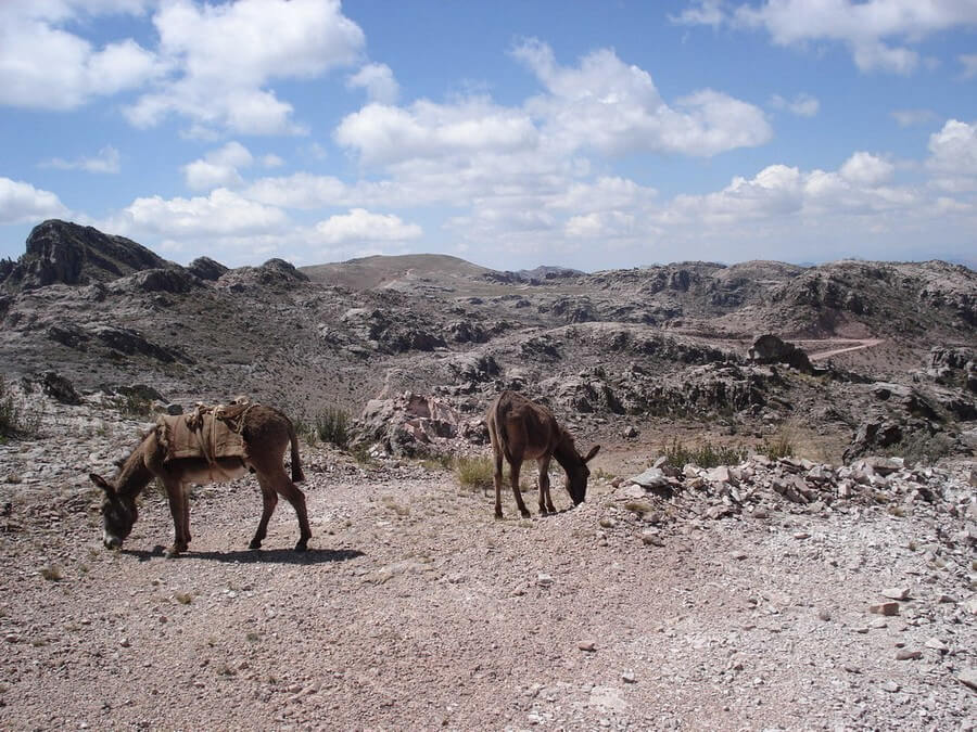 Donkeys on hike from Sucre