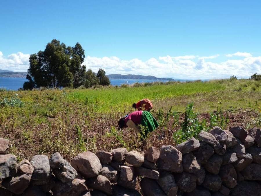 Local farming on Taquile Island