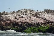 Birds on Islas Ballestas, Paracas