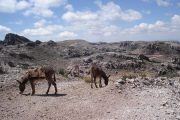 Donkeys on hiking trail