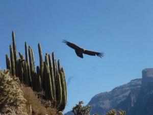 Cruz del Condor uitzichtpunt