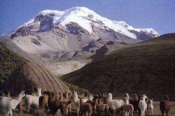 lama´s Vicuña Trek Ecuador