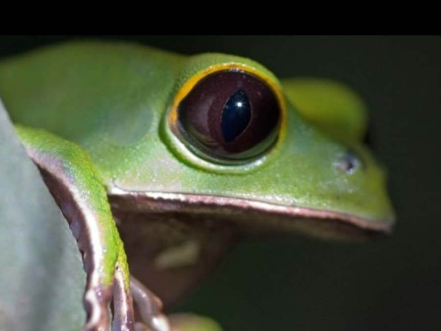 Frog in the Amazon Rainforest