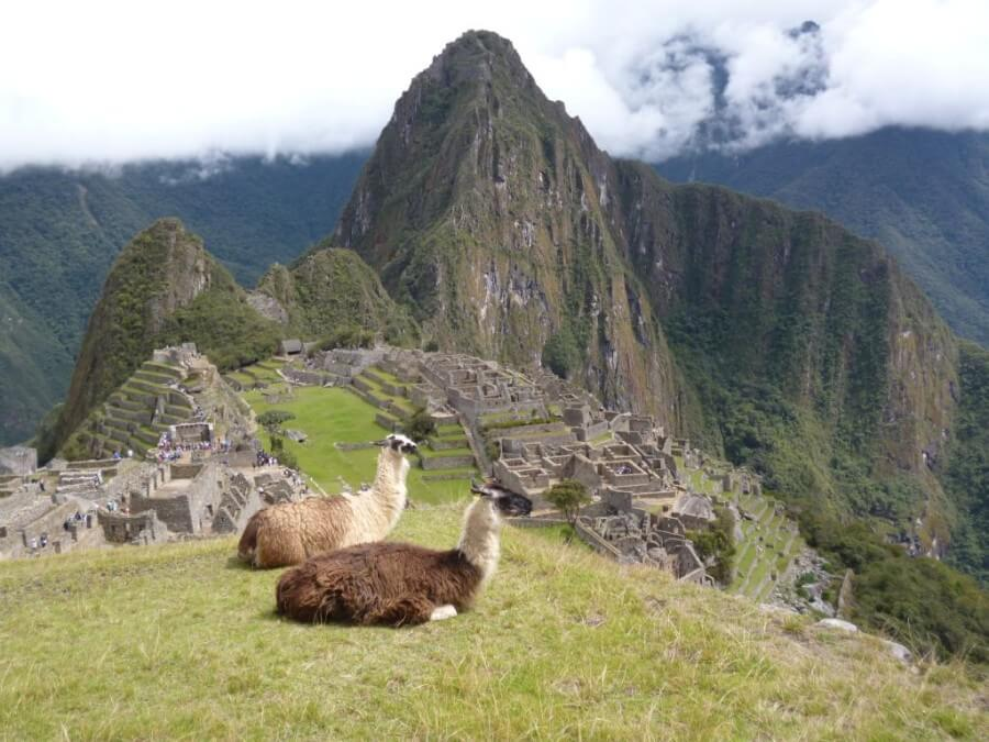 Lamas at Machu Picchu