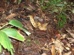 Snake in he Amazon