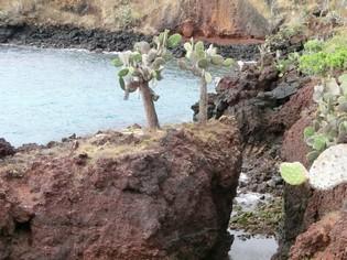 Santa Cruz Galapagos tours Ecuador