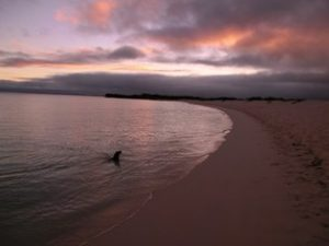 Sunset with sea lion on Galapagos