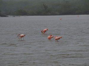 Flamingos Galapagos Eilanden tour