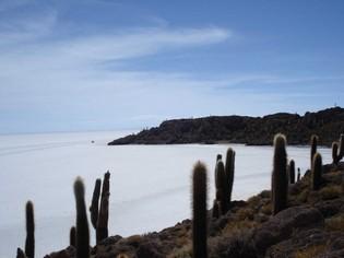 Inca Wasi Cacti Island, Salar de Uyuni