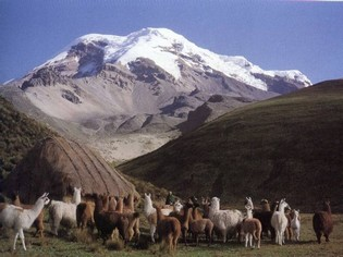 Vicuña Trekking Ecuador