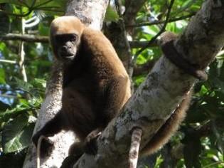 Wolaap Cuyabeno Amazone tour