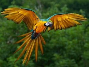 Macaw in the Amazon Rainforest