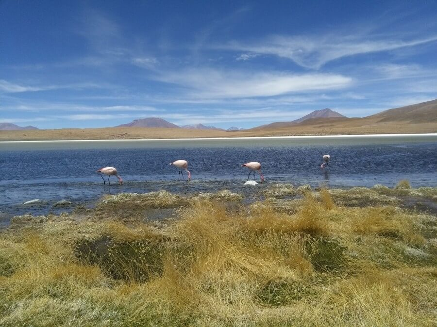 Flamingos Bolivia Peru Ecuador Fairtravel4u
