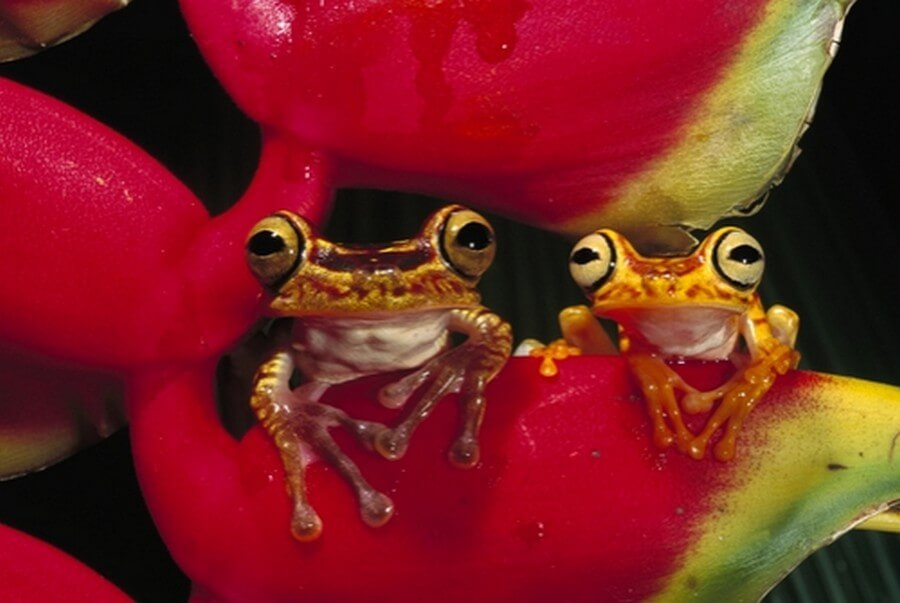 Colorful frogs on flower