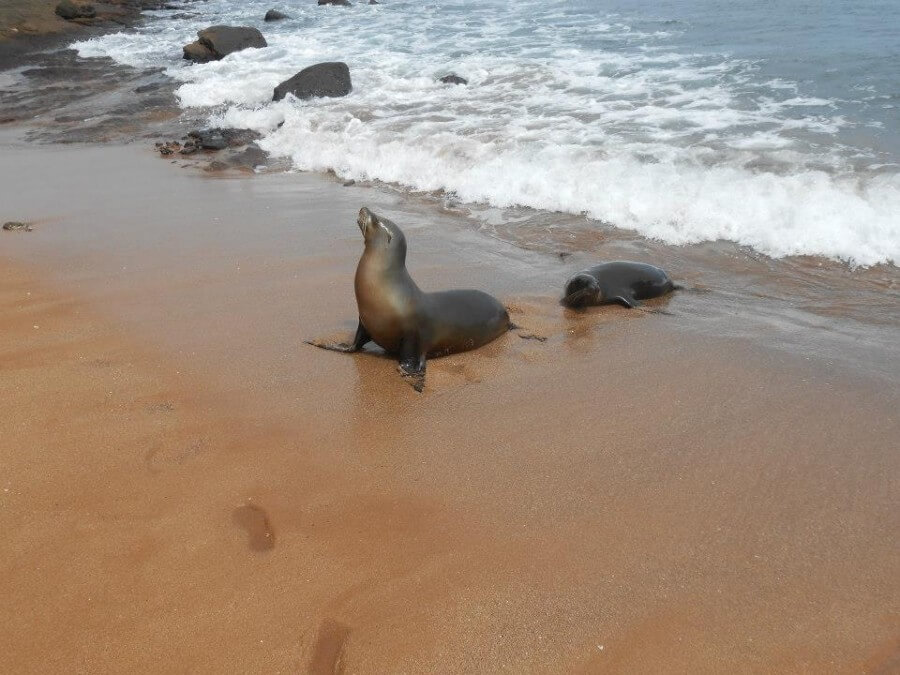 Sea lion with baby on beach