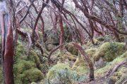 Hiking in Parque Cajas, Cuenca