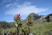Wandelen in het nationale reservaat Cajas
