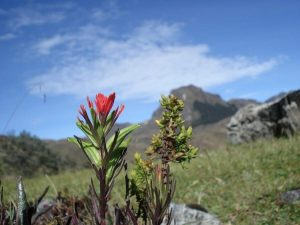 Hiking Cajas National Park