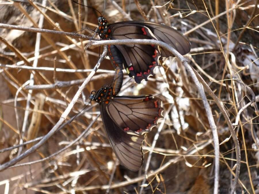 Butterflies in Ecuador