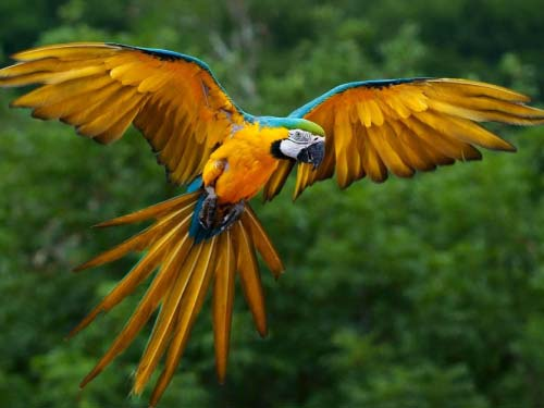 Macaw in an Amazon Tour