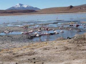 Review Fairtravel4u, Peru, Bolivia Tour