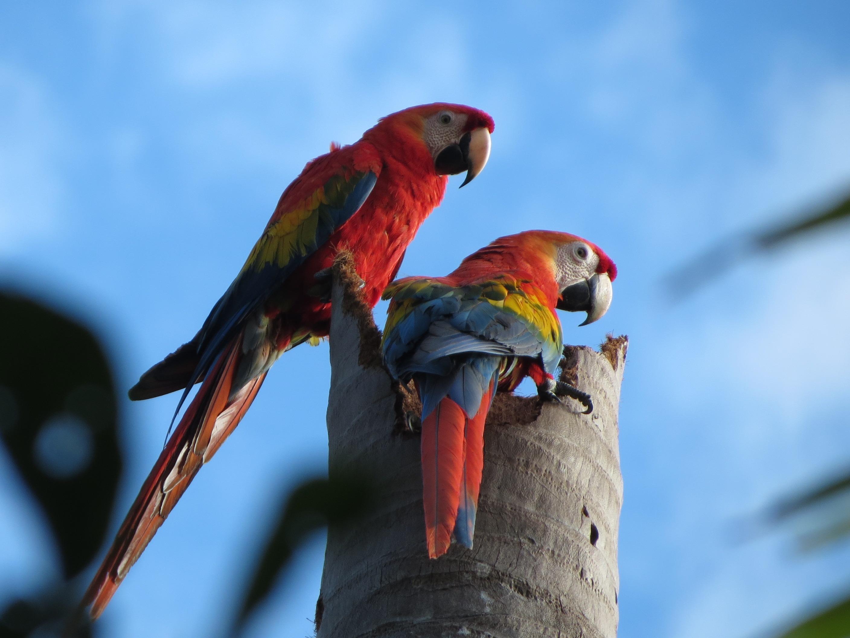 Ara's Amazone tour Peru