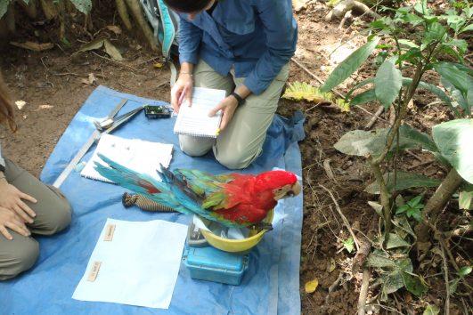 Tambopata Reseach Lodge Amazon Peru