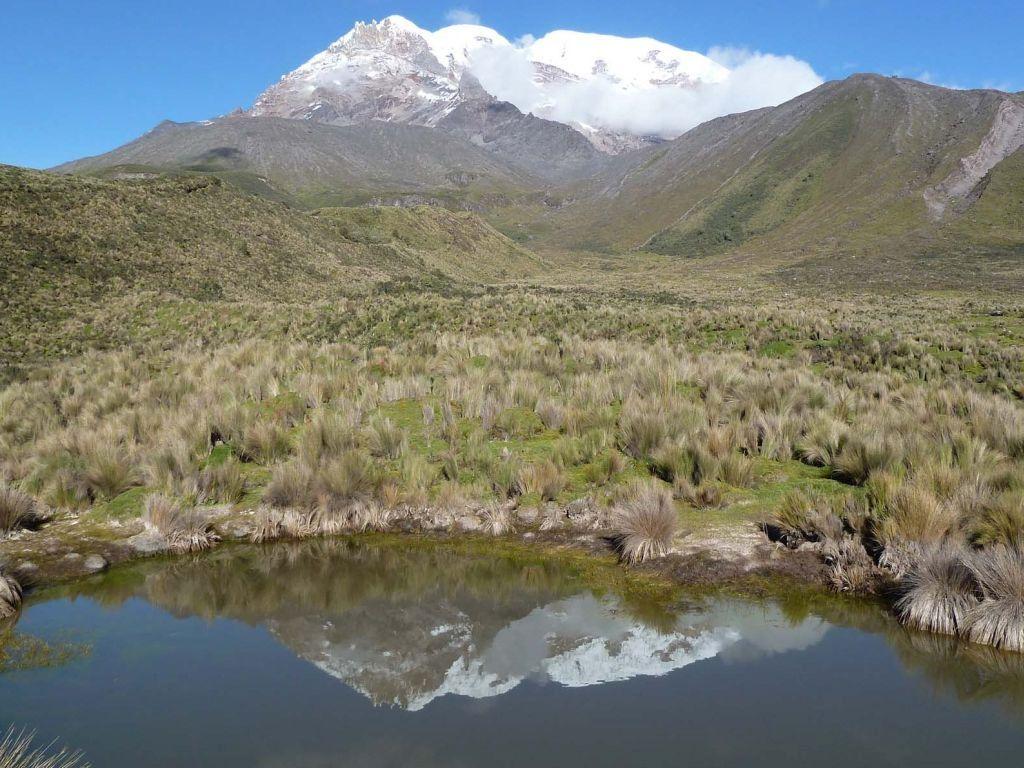 Vicuña Trektocht Ecuador